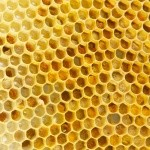 What is Active Raw Manuka Honey